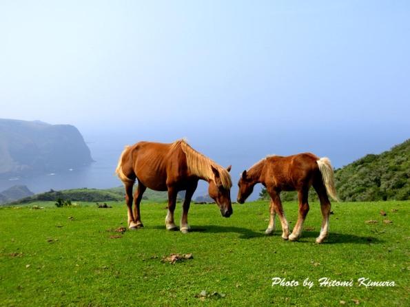 隠岐島前の馬の親子